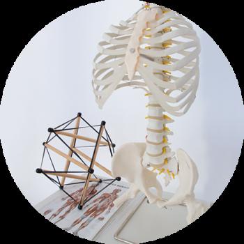 Pilatesbodyline-Spiraldynamik